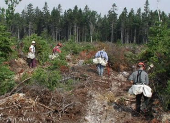 Trees and paper part 2 an overview of environmental for Soil xchange