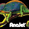 AnaJet Direct to Garment Shirt Image