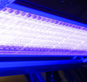 Pictured above is a close-up of the LED-UV Powerline Focus system from Eltosch Grafix.